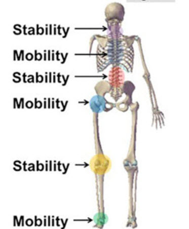 Stable Lower Back